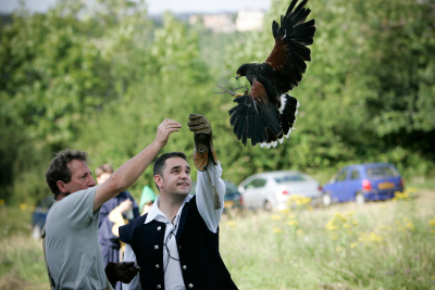 Falconry Displays for Corporate Entertainment