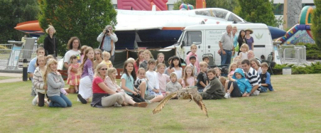 Falconry Displays for Education