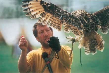 Falconry Displays